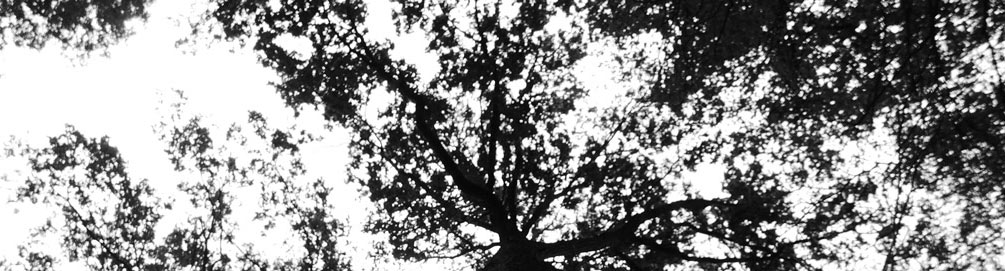 tree_shadow_medium