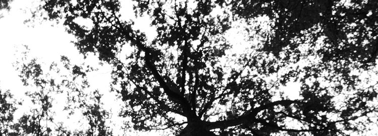 tree_shadow_mobile